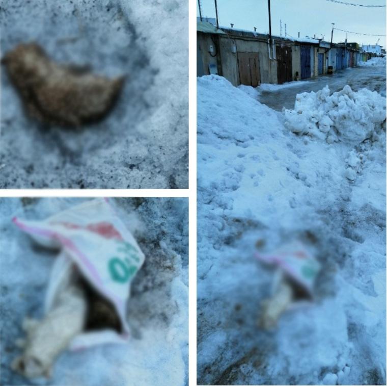 Фото: «Помощь животным Ноябрьска», VK